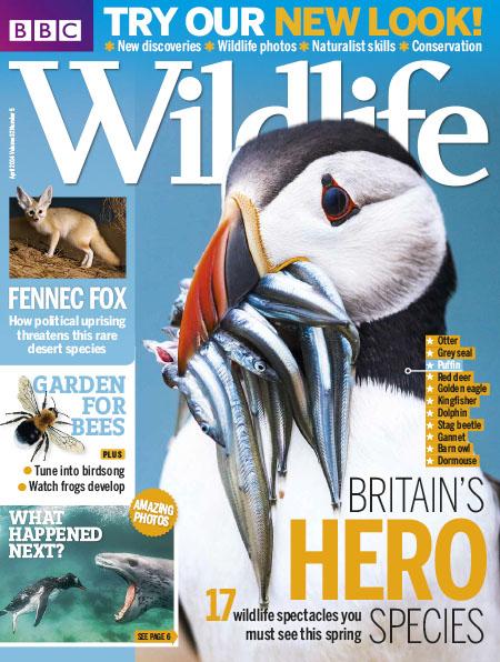 [英国版]BBC Wildlife 野生动物杂志 2014年4月刊
